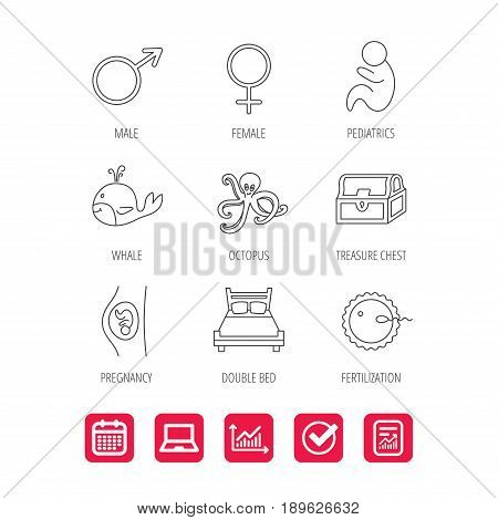 Fertilization, pregnancy and pediatrics icons. Baby child, whale and octopus linear signs. Treasure chest, double bed icons. Report document, Graph chart and Calendar signs. Laptop and Check web icons