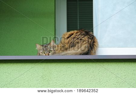 cute shy fluffy domestic cat on the window
