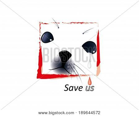 Face of harp seal pups on white background