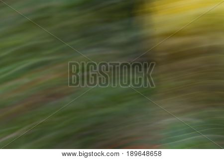 Abstraction using a yellow flower and movement