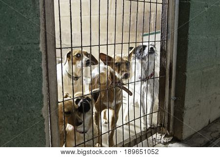 Caged And Abandoned Dogs