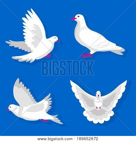 Pigeon or dove, white bird flying with spread wings in sky or sitting. Symbol of peace freedom or post mail delivery. Vector flat isolated icons set