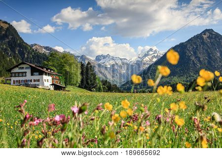Beautiful flower meadow and snow covered mountains and a cottage in the background. Allgau Alps.