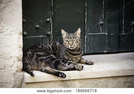 City Street Cat