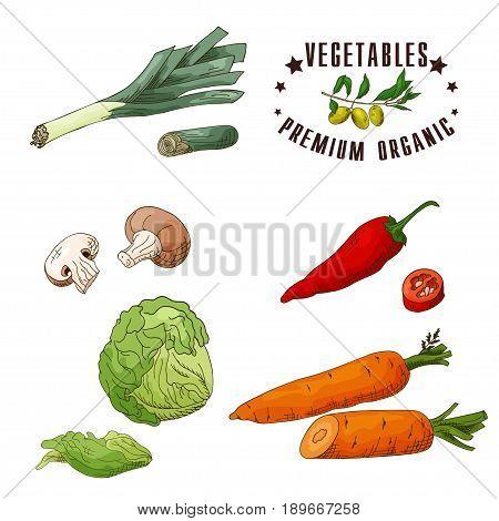 Vector vegetable element of leek, mushroom, chilli, iceberg lettuce, carrot. Hand drawn icon with lettering. Food illustration for cafe, market, menu design