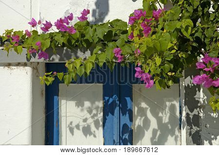 Beautiful flowers lining the doorway of a traditional house in Mertola village.