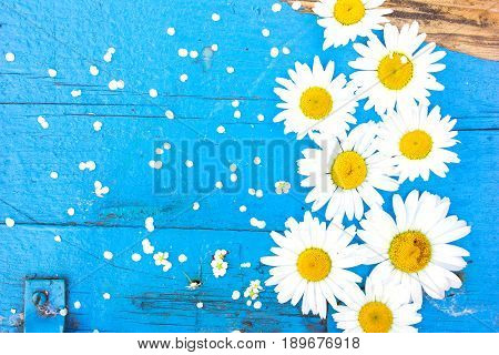 Wedding daisy flower on blue table from above. Flat lay style.