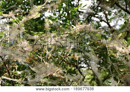 Web On The Plant