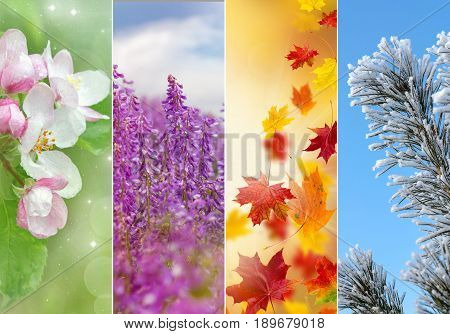 Four bright seasons - spring, summer, autumn winter
