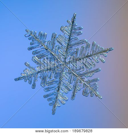 Real snowflake macro photo: very large stellar dendrite snow crystal with fine hexagonal symmetry and complex, elegant structure. Snowflake glittering on bright blue gradient background in cold light.