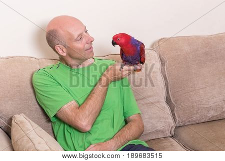 Man Sat On Sofa With Tame Red Parrot