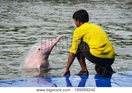The pink dolphin and Babysitter at thailand