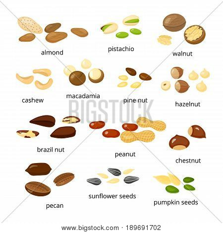 Collection of different cartoon nuts including almond, pistachio, walnut, cashew, macadamia, pine, hazel, brazil, peanut, chestnut, pecan, sunflower, pumpkin seeds isolated on white background.