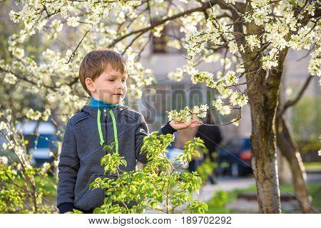 adorable kid boy portrait in blooming cherry garden walking outdoor. child exploring flowers on bloom tree.