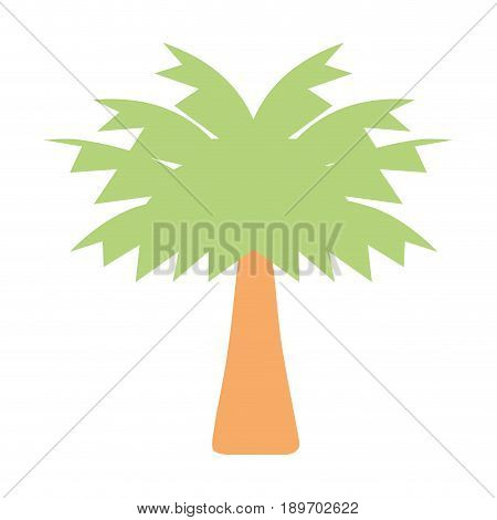 palm tree with leaves and vegetation vector illustration