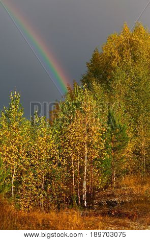 Autumn landscape. Rainbow over forest in sky