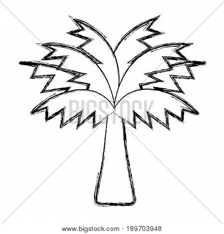 figure palm tree with leaves and vegetation vector illustration