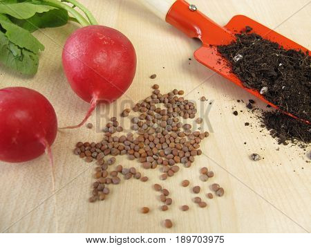 Radish seeds and fresh radishes on wooden board