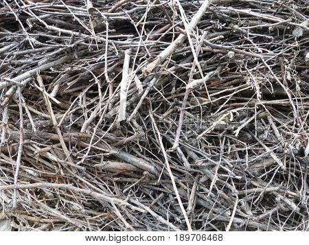Abstract background of dry stack thin firewood.