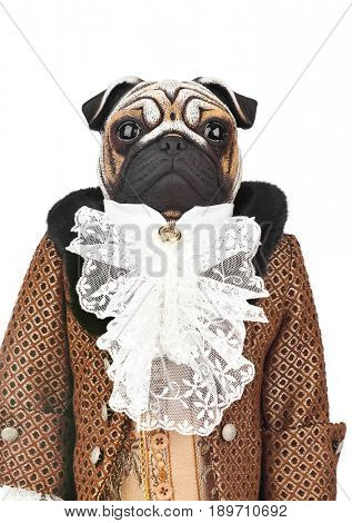 Toy pug dog in butler costume isolated on white background