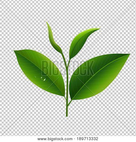 Tea Leaves In Transparent Background