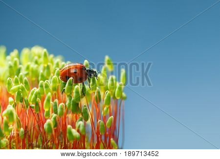 Red Bug On Green Moss
