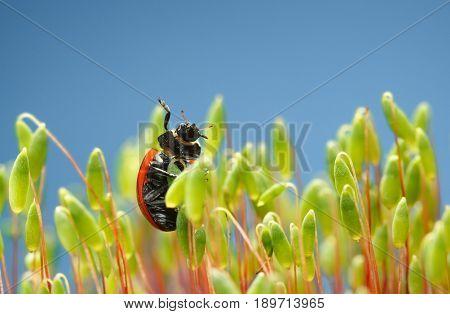 Ladybird Raise To Sky