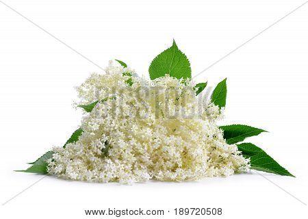 Elderberry flower (Sambucus nigra) isolated on a white background.