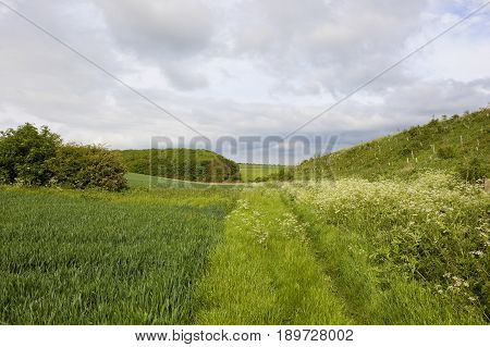 Woodland Copse And Wheat