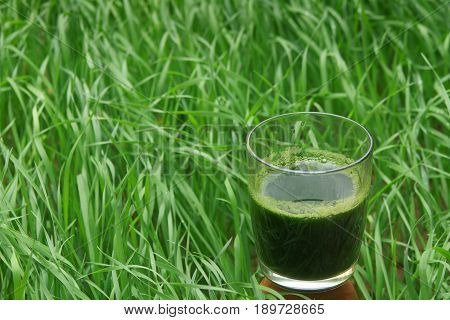 glass of wheatgrass juice on a brown wooden table with fresh wheat herbs and wheat spikelet against the background of a green wheat grass