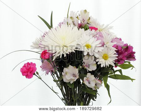 White pink and purple flowers with leaves in front of a white curtain covered window. Colorful bouquet top of flowers in front of a white curtain window