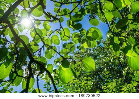Beautiful View on the first rays of Sun in the Morning. Sunlight falls on Green Leaves. Close-up of light flooded Leaves on a sunny Day.