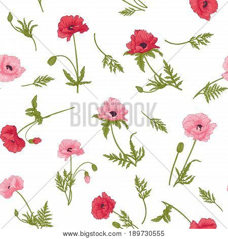 Seamless pattern with pink and red poppy flowers in botanical style on white background. Stock line vector illustration.