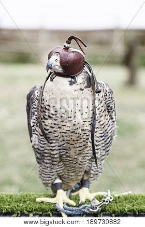 Halcon Falconry