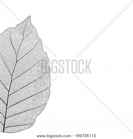 Botanical series Elegant Single detailed  partial leaf in sketch style  black and white on white background