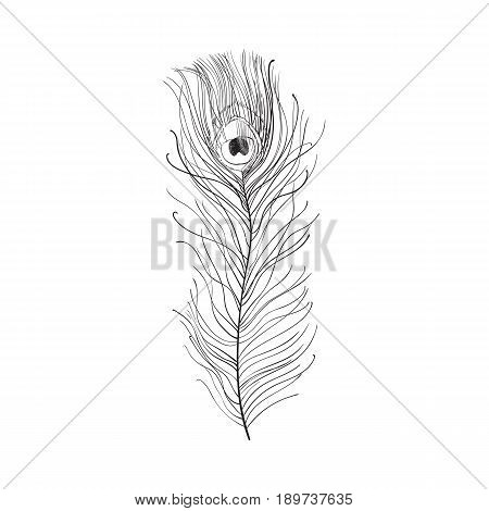 Hand drawn peacock tail bird feather, sketch style vector illustration on white background. Realistic hand drawing of beatiful peacock eye spotted tail quill feather poster