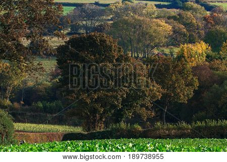 Autumn landscape with large trees in Dartmoor National Park. Devon. England