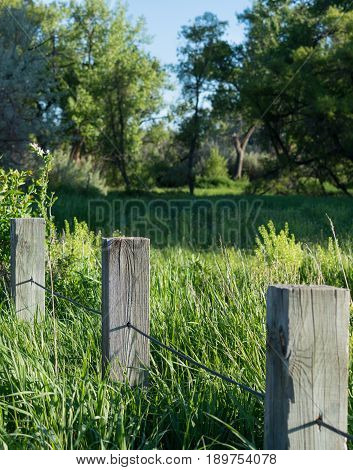 Close up of weathered wood fence posts through a green grassy meadow with deciduous trees in the background.