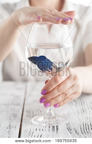 Woman Protect Fish In A Wine Glass, Ecology, Clean Water, Concept Photo