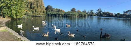 Western Springs Park In Auckland New Zealand