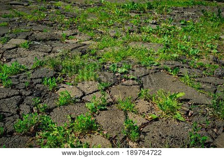 Young Green Grass Growing Through Urban City Asphalt, Concept Of Life Defeating Death