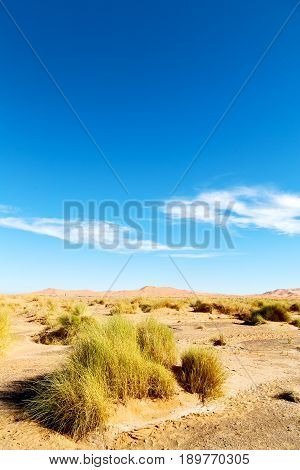 Mountain Old Fossil In  The Desert Of Morocco Sahara And Rock  Stone    Sky