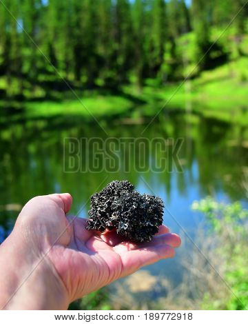 Hand holding a ball of black lichen with a pond and forest in the background