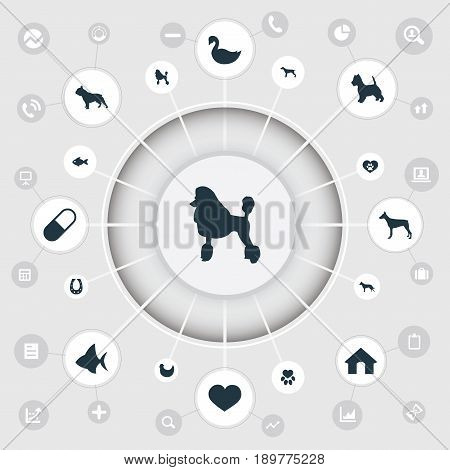Vector Illustration Set Of Simple Animals Icons. Elements Watchdog, Lake Bird, Hound And Other Synonyms Animal, Curly And Dog.