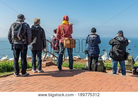 HELGOLAND GERMANY - MAY 20 2017: Bird watchers near breeding Northern Gannets at red cliffs of Helgoland