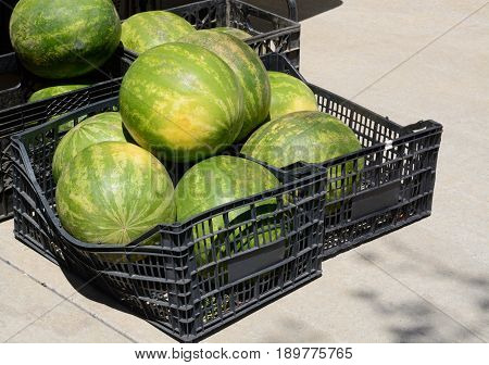 Crates of whole seedless watermelon at farmers market