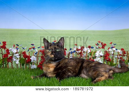 Tortie torbie tabby cat laying in green grass back yard setting stick fence with red white blue flowers behind them with field of grass behind looking at viewer with green eyes. Wearing collar