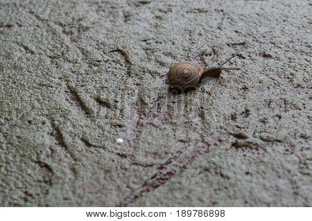 A small snail crawling on a rain covered sidewalk.