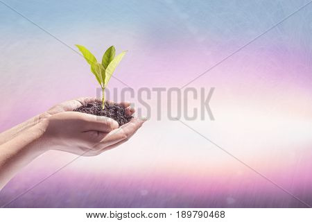 Human hand holding perfect growing tree plant on soil on blur natural background of greenery leaves: Reforestation sustainable forest saving environment and harmony ecosystems conservation campaign