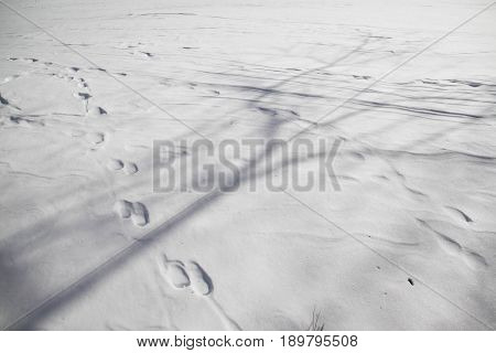 Shadow and footsteps on snow in winter